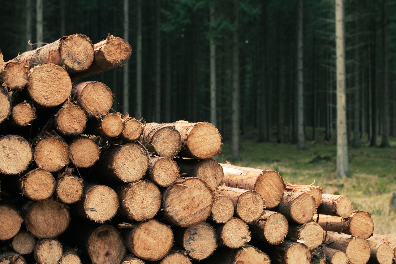 Wood by a forest